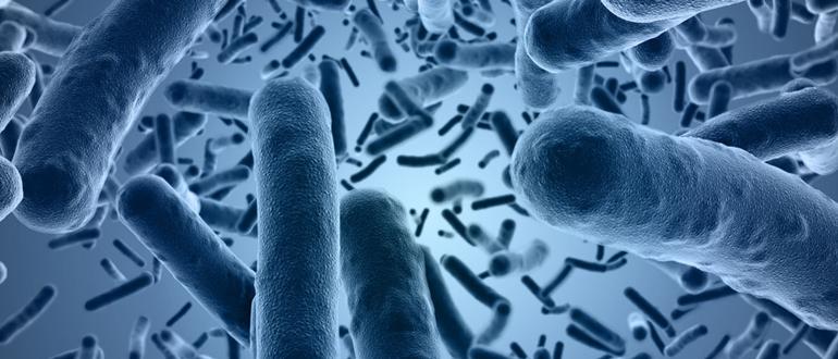 ERP et légionelles : comment prévenir et traiter les bactéries ?